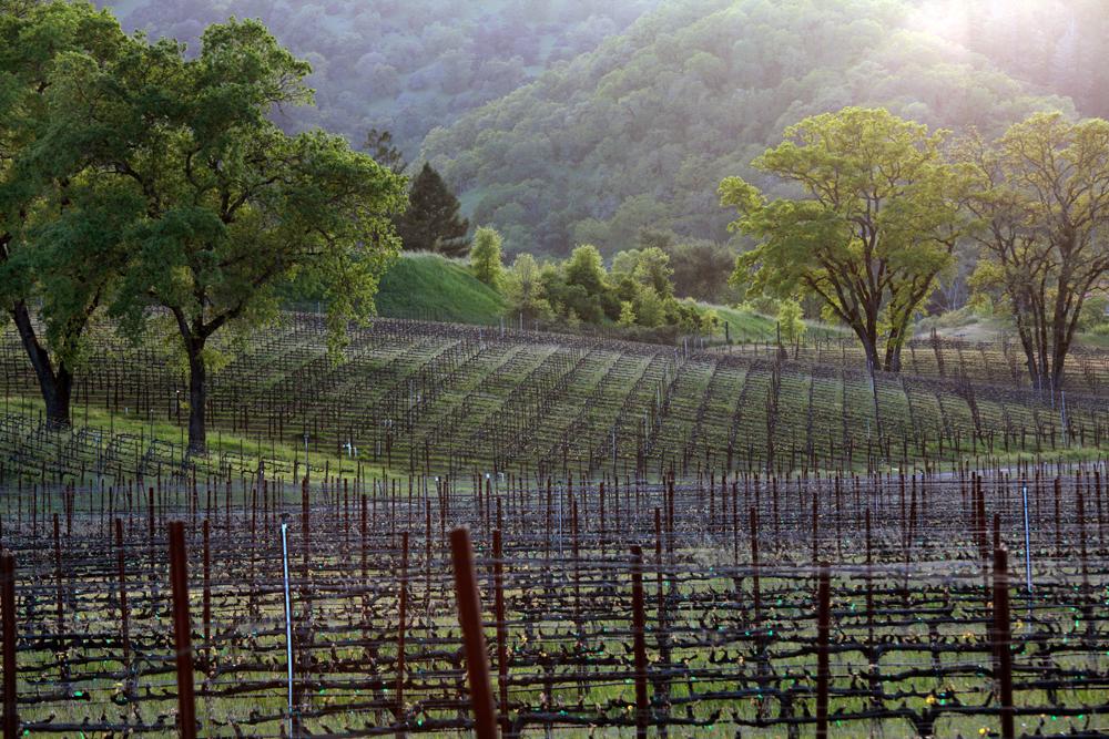 bv-mendo101-vineyard-9845.jpg